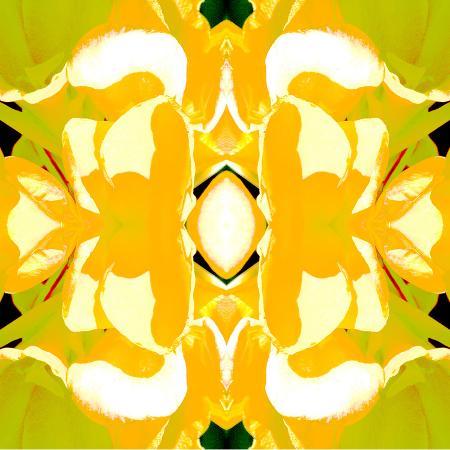 rose-anne-colavito-lemon-canna2