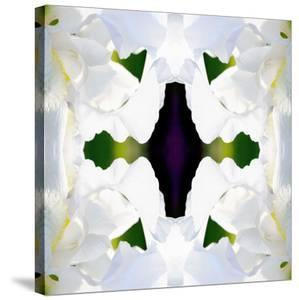 Wedding Iris by Rose Anne Colavito
