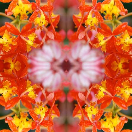 rose-anne-colavito-yellow-orchids