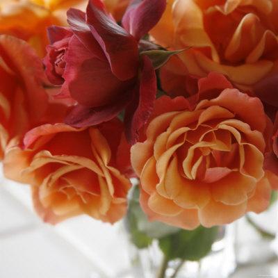https://imgc.artprintimages.com/img/print/rose-bouquet-i_u-l-p23foh0.jpg?p=0
