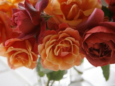 https://imgc.artprintimages.com/img/print/rose-bouquet-ii_u-l-p23fp90.jpg?p=0