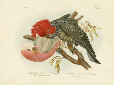 Rose-Breasted Cockatoo, 1891-Gracius Broinowski-Giclee Print