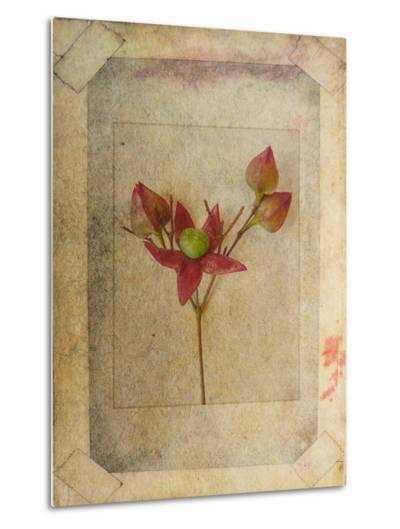 Rose Copie-Nathalie Diacci-Metal Print