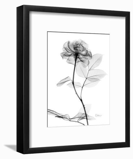 Rose Gray A-Albert Koetsier-Framed Premium Giclee Print