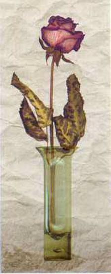 Rose in a Pot III-Giancarlo Riboli-Art Print