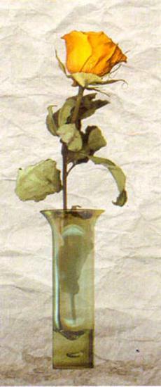 Rose in a Pot IV-Giancarlo Riboli-Art Print