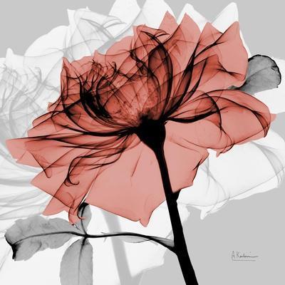 https://imgc.artprintimages.com/img/print/rose-on-gray-2_u-l-pyjyt50.jpg?p=0