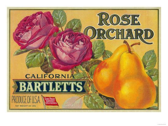 Rose Orchard Pear Crate Label - San Francisco, CA-Lantern Press-Art Print