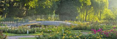 Rose Patches, Doblhoffpark, Baden Near Vienna, Lower Austria, Austria-Rainer Mirau-Photographic Print