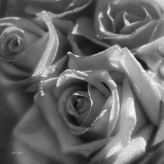 Rose Pedals B&W-Collin Bogle-Art Print