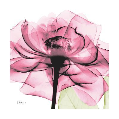 Rose Pink-Albert Koetsier-Art Print