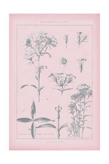 Rose Quartz Phlox-Wild Apple Portfolio-Art Print