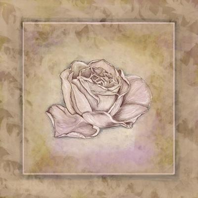 https://imgc.artprintimages.com/img/print/rose-square-iii_u-l-f8m6qj0.jpg?p=0