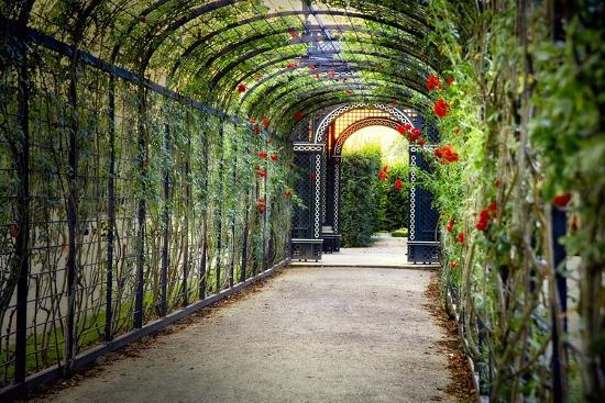 Rose Trellis In Schonbrunn Palace-George Oze-Photographic Print