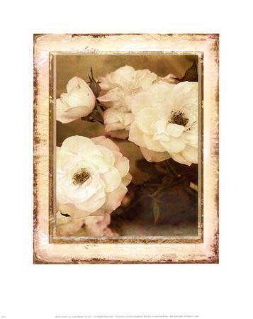 https://imgc.artprintimages.com/img/print/rose-white_u-l-f8u7pc0.jpg?p=0