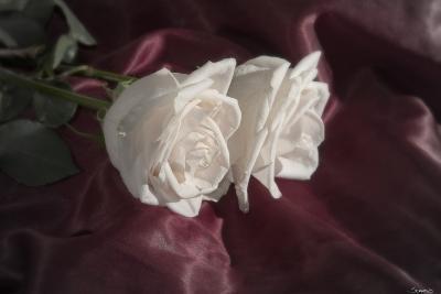 Rose-Gordon Semmens-Photographic Print