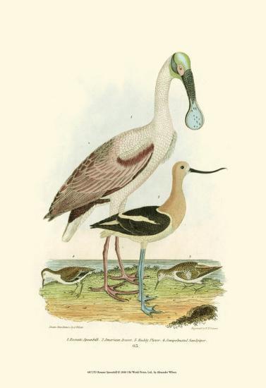 Roseate Spoonbill-Alexander Wilson-Art Print