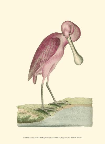 Roseate Spoonbill-Frederick P^ Nodder-Art Print
