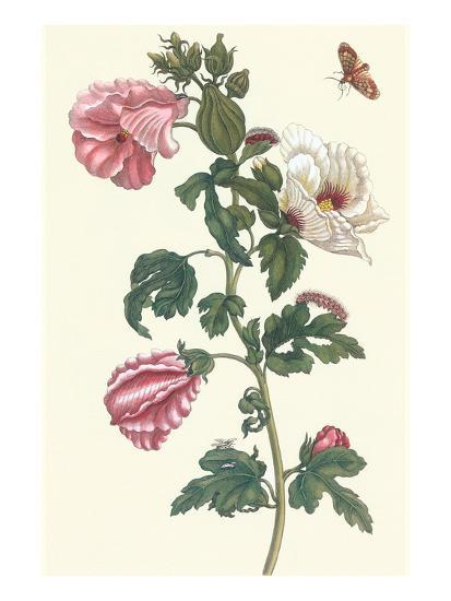 Roselle with Fall Webworm-Maria Sibylla Merian-Art Print