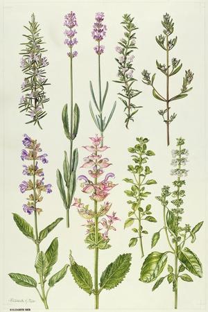 https://imgc.artprintimages.com/img/print/rosemary-and-other-herbs_u-l-pjc8l80.jpg?p=0