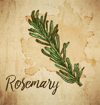Rosemary on Burlap-Color Me Happy-Art Print