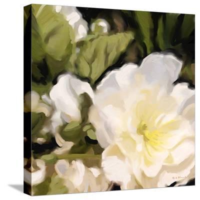 Roses 11-Kurt Novak-Stretched Canvas Print