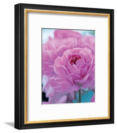 Roses Anglaises-Friis Larsen-Framed Art Print