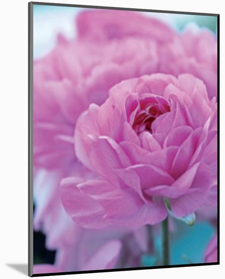 Roses Anglaises-Friis Larsen-Mounted Art Print