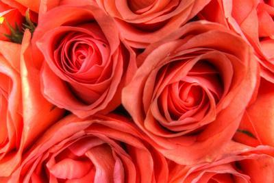 https://imgc.artprintimages.com/img/print/roses-in-a-bunch_u-l-q10pmem0.jpg?p=0