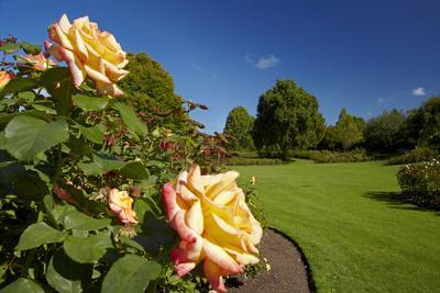 Roses in an Elegant Garden, Waikato, North Island, New Zealand-David Wall-Photographic Print