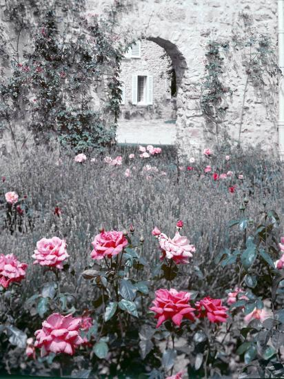 Roses in Fore in Duke of Windsor's Garden at His Summer Home in South of France-Frank Scherschel-Photographic Print