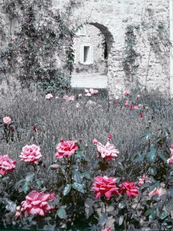 https://imgc.artprintimages.com/img/print/roses-in-fore-in-duke-of-windsor-s-garden-at-his-summer-home-in-south-of-france_u-l-p6yeix0.jpg?p=0