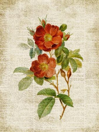 https://imgc.artprintimages.com/img/print/roses-on-newsprint-ii_u-l-pxkfd10.jpg?p=0