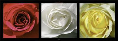 Roses-Laurent Pinsard-Art Print