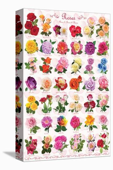 Roses--Stretched Canvas Print