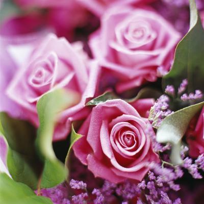Roses-David Munns-Photographic Print