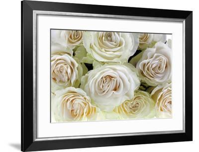 Roses-Fabio Petroni-Framed Photographic Print
