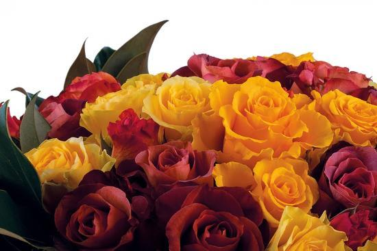 Roses-Fabio Petroni-Photographic Print