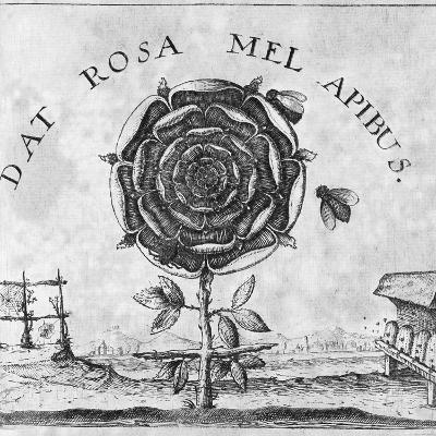 Rosicrucian Mystical Symbol-Middle Temple Library-Photographic Print