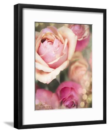 Rosie Pink II-Sonja Quintero-Framed Art Print