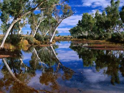 Creek Lined with River Red Gum Near Hermannsaburg, Northern Territory, Australia