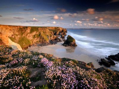 Bedruthan Steps on Cornish Coast, with Flowering Thrift, Cornwall, UK
