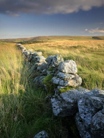Dry Stone Wall and Moorland Grassland, Late Evening Light, Dartmoor Np, Devon, Uk. September 2008