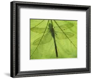 Emperor Dragonfly, Silhouette Seen Through Leaf, Cornwall, UK by Ross Hoddinott
