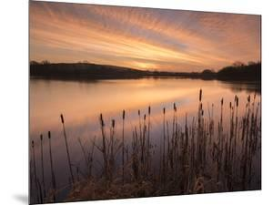 Lower Tamar Lakes, reflections and rushes, colurful winter sunrise, North Cornwall, UK by Ross Hoddinott