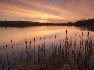 Lower Tamar Lakes, reflections and rushes, colurful winter sunrise, North Cornwall, UK by Ross Hoddinott