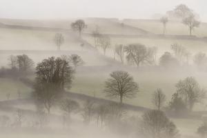 Morning mist, near Tavistock, Dartmoor NP, Devon, UK by Ross Hoddinott