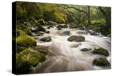 River Plym Flowing Fast Through Dewerstone Wood, Shaugh Prior, Dartmoor Np Devon, UK, October