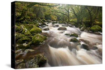 River Plym Flowing Through Dewerstone Wood, Dartmoor Np, Devon, England, UK, October
