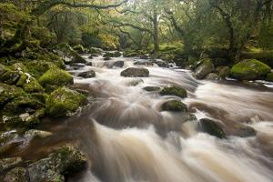 River Plym Flowing Through Dewerstone Wood, Dartmoor Np, Devon, England, UK, October by Ross Hoddinott